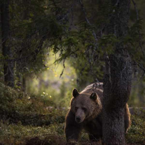 Recognition in the Finnish Nature Photographs of the Year 2019